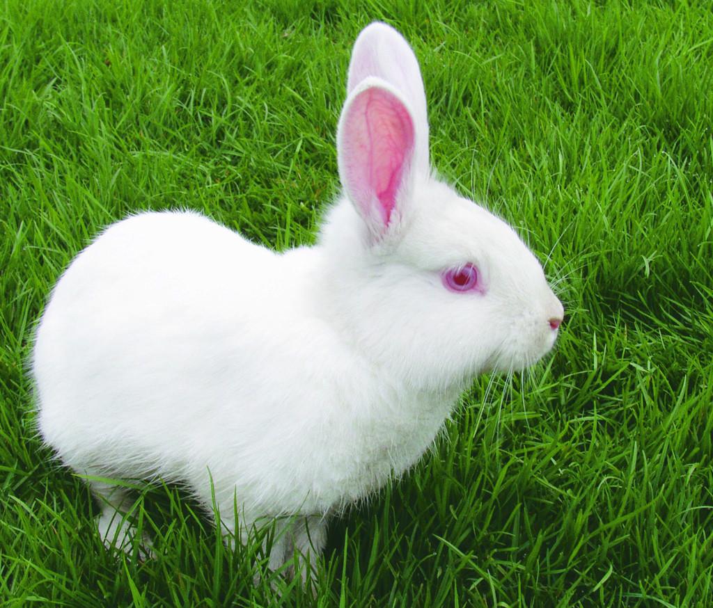 兔子怎么看公母