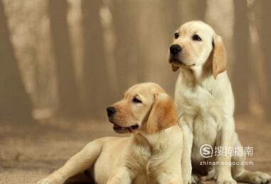一个狗狗太孤单,家养两只狗的常见问题解析