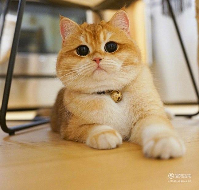 小橘猫怎么养