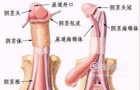 包皮手术详细过程