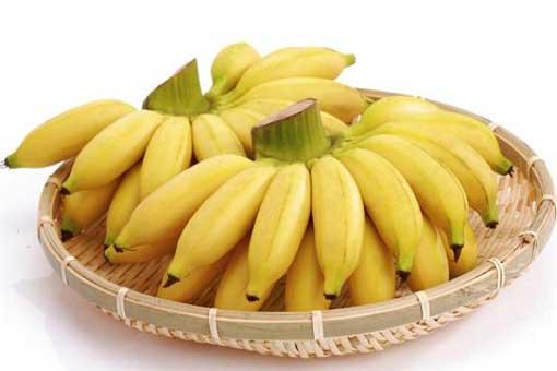 怎么区分芭蕉和香蕉