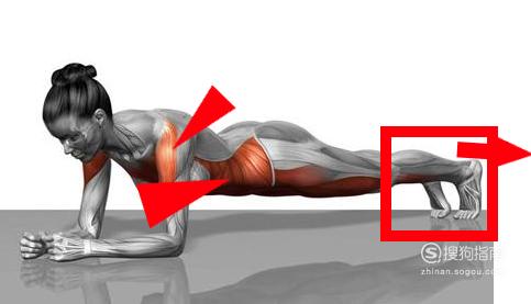 平板支撑的正确姿势